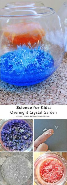 Science for Kids: How To Grow Crystals -- Overnight Crystal Garden Preschool Science, Science Classroom, Teaching Science, Science For Kids, Rock Science, Science Week, Science Nature, Science Activities, Activities For Kids