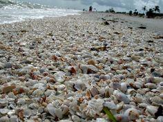 Shell-covered beach at Caribe Beach Resort on Sanibel Island