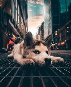 Things that make you go AWW! Like puppies, bunnies, babies, and so on. A place for really cute pictures and videos! Dog Wallpaper Iphone, Cute Dog Wallpaper, Animal Wallpaper, Wallpaper Wallpapers, Wallpaper Ideas, Puppies Wallpaper, Puppy Care, Pet Puppy, Dog Cat