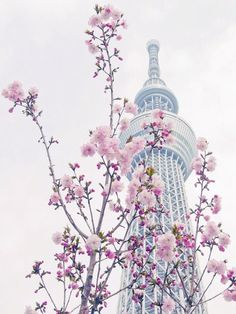 Seoul Tower in South Korea during spring Great tourist attraction! South Korea Seoul, South Korea Travel, Tokyo Skytree, Tokyo Japan, Belle Photo, Vietnam, Beautiful Places, Beautiful Sky, Beautiful Flowers