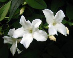 flores exoticas blancas - Buscar con Google
