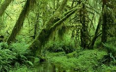 forest tropica; - Google Search