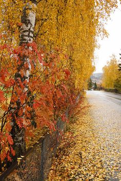 Narajas y amarilos, los colores del Otoño Time Of The Year, Norway, Country Roads, Autumn, Beautiful, Autumn Scenery, Scenery, Colors, Fall