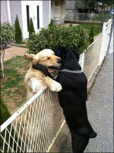 friends... will be friends!