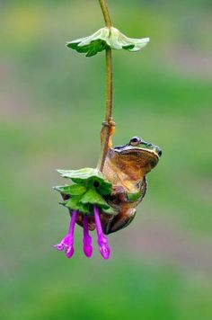 Froggy Hold On - Google+