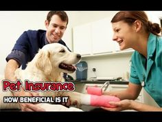 Pet Insurance   How Is Pet Health Insurance Beneficial dog insurance HD