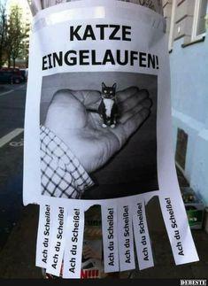 Katze eingelaufen! | Lustige Bilder, Sprüche, Witze, echt lustig