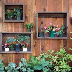 Reclaimed wood used as frames to show off beautiful plants. Perfect for my side patio