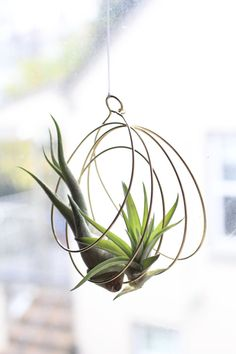 Air plant holder https://www.etsy.com/listing/255678880/tillandsia-ornaments-air-plant-ornaments