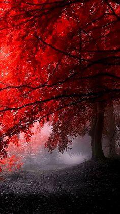 FLOWER POWER #autumn #beautiful #nature