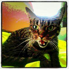 My cat RUNTLEY