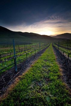 The sun rising on Laetitia Estate Vineyards. Arroyo Grande, Ca Central California, Visit California, California Wine, Central Coast, Arroyo Grande, Avila Beach, San Luis Obispo County, Pismo Beach, Pacific Coast Highway