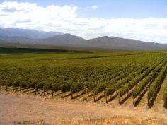 El árido paisaje de la provincia de San Juan deslumbra repentinamente cortando sus típicos ocres y opacos con los verdes relucientes de sus extensos cultivos.