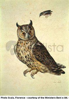 'Strix Bubo (Owl)' by Jacopo Ligozzi