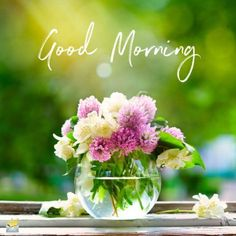 New HD Collection Free Good Morning Pics , Good Morning Wallpaper , Good Morning Photo Pics Pictures Free Download & Share . Good Morning Flowers Pictures, Good Morning Beautiful Flowers, Good Morning Roses, Good Morning Beautiful Images, Good Morning Happy, Good Morning Picture, Morning Pictures, Morning Pics, Beautiful Life