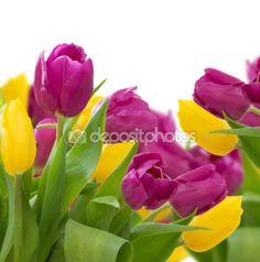 Tulipanes amarillos y violetas — Foto de stock © Neirfys #94879340