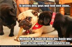 That's what I tell my pugs when I'm chewing on my bone. Photobucket