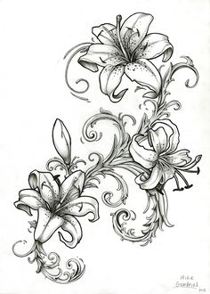 Stargazer Lily Drawing Outline   Viewing Gallery pictures