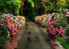 Imagini pentru rose garden design ideas