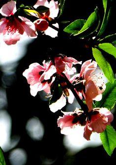 Peaches, Plants, Ideas, Peach, Planters, Plant, Planting, Thoughts