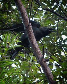 そろそろサビの部分。   #crow #bird #カラス #鳥