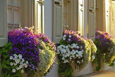 ...♥  Flowers in Window Boxes, Tradd St., #CHARLESTON, S #CAROLINA