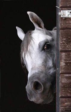 Curious horse. © Thomas Schmitt