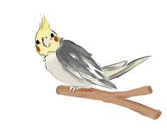 ninfa BIRD ILLUSTRATION - Buscar con Google