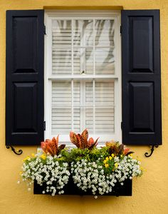 Charleston Window Box Stretched Canvas