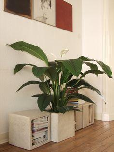 14 rostlin do kanceláře, které prospějí vašemu zdraví Home Office, Relax, Flowers, Plants, Gardening, Plant Decor, Balconies, Office Home, Florals