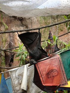 Bat hanging with Buddhist prayer flags - ... Prayer Bats...