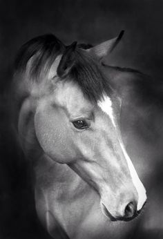 Imagen de https://wildairportraits.files.wordpress.com/2012/03/black-and-white-horse-portrait10.jpg.