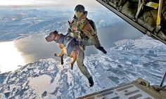 Military Paratrooper Dogs