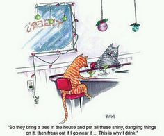 Two cats in a bar at Christmas