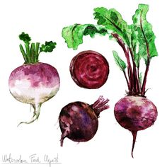 Watercolor Food Clipart - Beetroot and Turnip