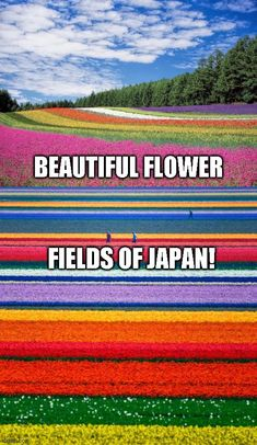 "Beautiful flower fields like these run rampant throughout Japan. If you ever get the chance to go to Japan add these to your tourist to do list! ""Nature is not a place to visit. It is home"" - Gary Snyder, click here to see more nature ""stuff"" #camping #tent #hiking #tactical #outdoors #campingfood #campinghacks #hikinghacks #sleepingbag #campingmusthaves #hikingandcamping #campinggear #campingtents #campingglamping #campingsurvival #bigtents #campingrecipes #cheapmattresses #tactical… Camping Must Haves, Camping List, Camping Glamping, Camping Recipes, Camping Outdoors, Camping Survival, Outdoor Survival, Camping Meals, Survival Tips"