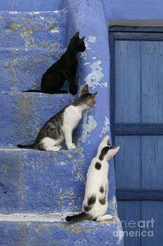 Three Kittens Sitting & Watching Photograph by Jean-Louis Klein & Marie-Luce Hubert