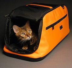 Sac de transport SLEEPYPOD AIR chien et chat orange