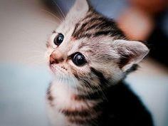 nomes de gato