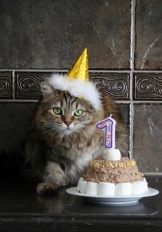 Lovely-KittyCats, animalslovecake: Jo and her Cake (by...
