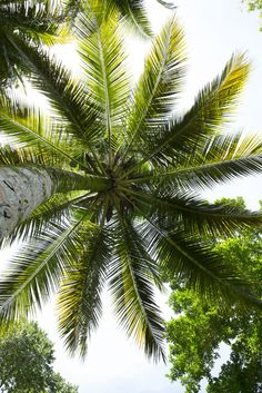 Our favorite view. #palmtrees #caribbean #cruise