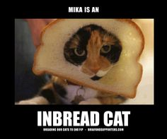 If you don't talk to your cat about inbreading, who will?  Just another inbread #cat on Pinterest.