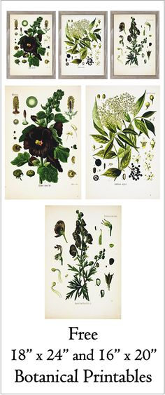 Free 18 x 24 and 16 x 20 Printable Floral Botanical Prints- Series 1 Free Poster, Printable Art, Free Printables, Diy Wall, Wall Decor, Do It Yourself Inspiration, Metal Tree Wall Art, Motif Floral, Free Prints