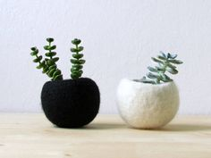 Felt succulent planter / felted pod / Succulent by theYarnKitchen, $36.00