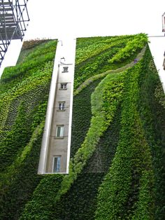 """Vertical garden by Patrick Blanc - the original master of the """"green wall""""! Green Architecture, Amazing Architecture, Landscape Architecture, Landscape Design, Architecture Design, Urban Landscape, Contemporary Architecture, Vertical Vegetable Gardens, Vertical Planting"""