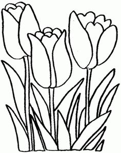 Tulip Flowers Coloring Sheets Free For Preschool 20598