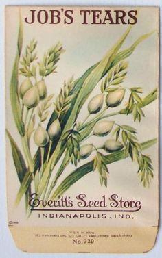 Everitt's Seed Store Vintage Job's Tears, 1910s