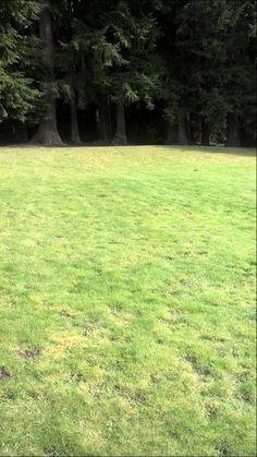 Seattle pest control:Mole control-extermination 206 571 7580