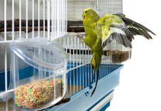 Klatki dla papużek falistych