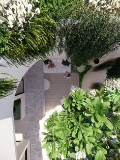 Outdoor courtyard landscaping design with best landscaper recommendations tristanpeirce Landscape Architecture Pool and Garden Design Perth Australia Courtyard Landscaping, Small Courtyards, Landscape Architecture Design, Perth Australia, Garden Design, Plants, Outdoor, Outdoors, Yard Landscaping